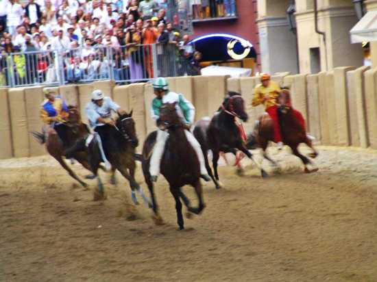 Cavallo scosso, Palio di Asti, 16 settembre 2007 (2973 clic)