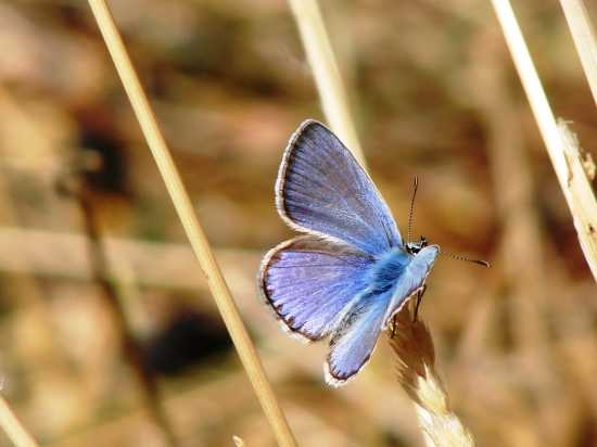 farfalla - ETNA - inserita il 11-Feb-10