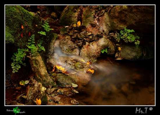 La luce del bosco - Caltagirone (4012 clic)