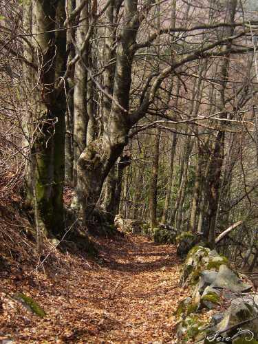 Sentiero nei boschi del comune di Fiumalbo (2191 clic)