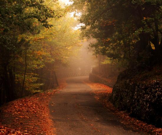 Autunno nel bosco della Milia - Ragalna (4168 clic)