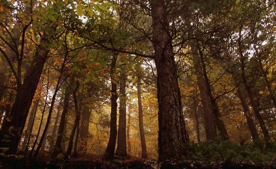 il bosco in pieno autunno - Ragalna (2309 clic)