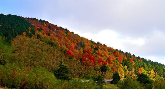 I colori dell'autunno - Etna (832 clic)