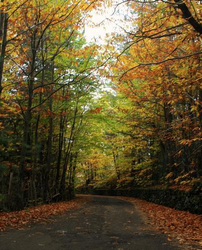 il bosco in autunno - Ragalna (1852 clic)