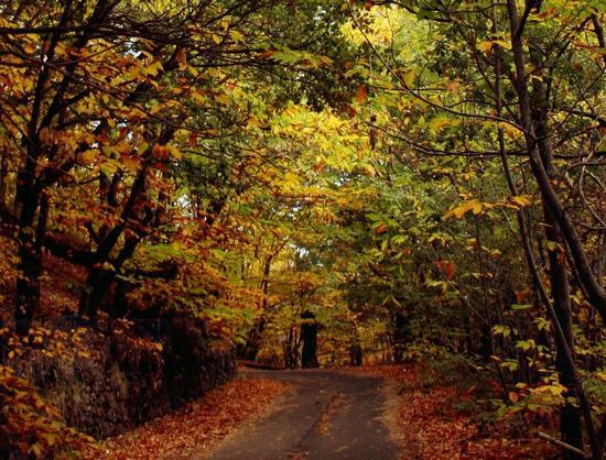 viale di autunno - RAGALNA - inserita il 14-Oct-13