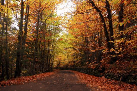 I colori dell'autunno - Ragalna (1243 clic)