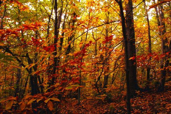 I colori dell'autunno - Ragalna (5322 clic)