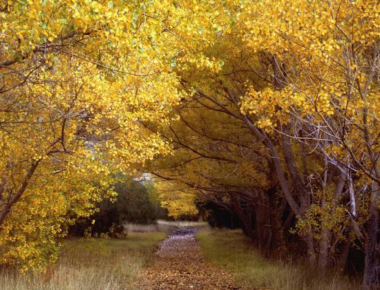 viale di faggi in autunno - Nicolosi (690 clic)