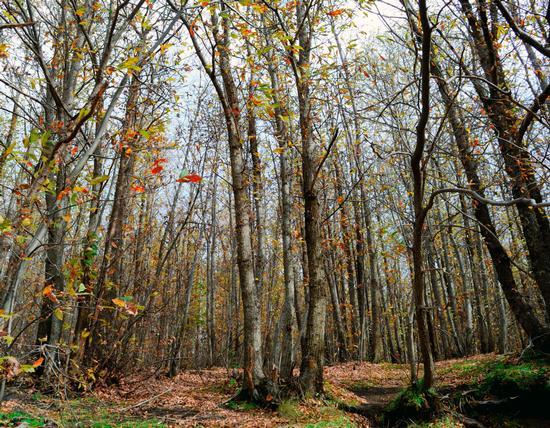 Autunno nei boschi dell'Etna - Nicolosi (9 clic)
