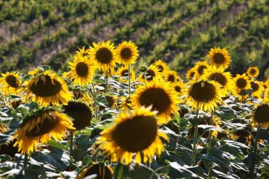 Guardano il sole - Ripatransone (2392 clic)