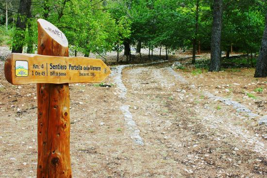 Sentiero Portella della Venere - Cammarata (4051 clic)