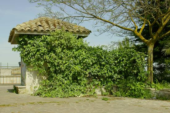 Chiosco - Pietraperzia (3057 clic)