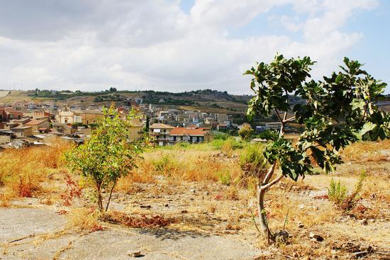 Quel Fico del Paesaggio  - Ravanusa (3365 clic)