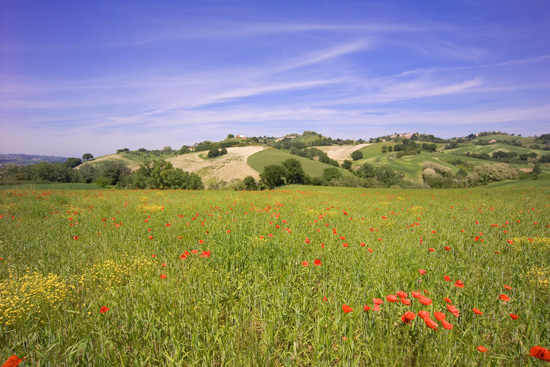 Campagna Forsempronese - Fossombrone (2688 clic)
