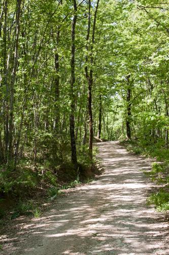C'è una strada nel bosco - Assisi (1275 clic)