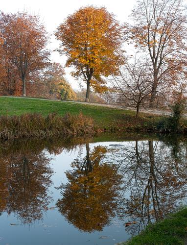 Riflessi nel Parco della Burcina - Pollone (2943 clic)