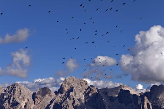 Battito d'ali sulle cime e creste del Catinaccio - Alpe di siusi (1834 clic)
