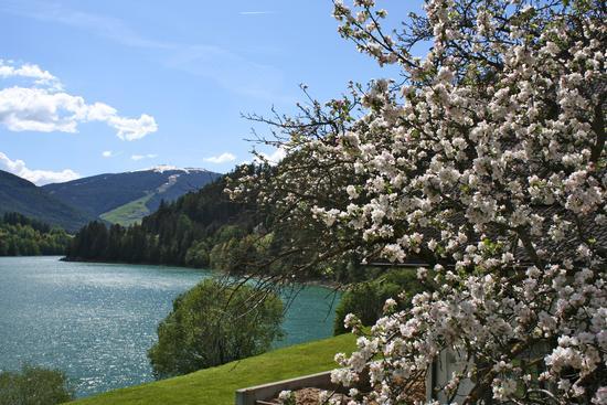 Primavera sul lago - Valdaora (1378 clic)