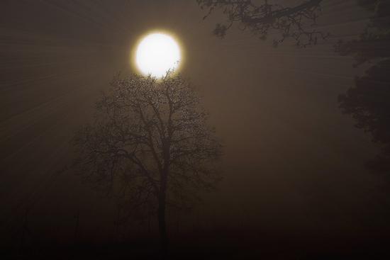 Nebbia e luce - Trieste (2685 clic)