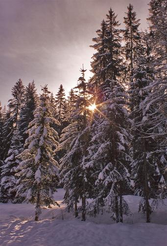 Una luce nel biancore..... - Cortina d'ampezzo (1994 clic)