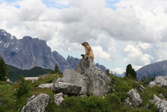 Le Sentinelle dell'Alpe sempre all'erta - Passo falzarego (1914 clic)