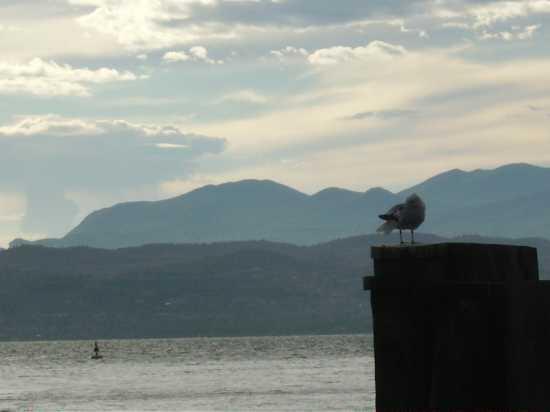 Attesa sul lago - Sirmione (2184 clic)