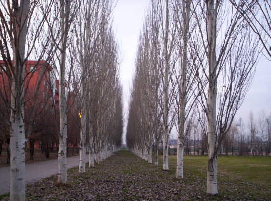 Viale d'autunno - Vicenza (3199 clic)