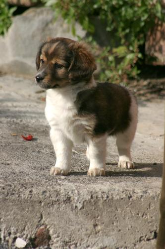 la mia cucciolotta - Motta sant'anastasia (3297 clic)