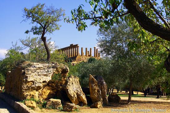 I Templi di Agrigento (556 clic)