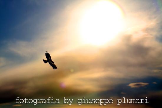 Poiana (rapace simile a l'aquila) - Motta sant'anastasia (2773 clic)