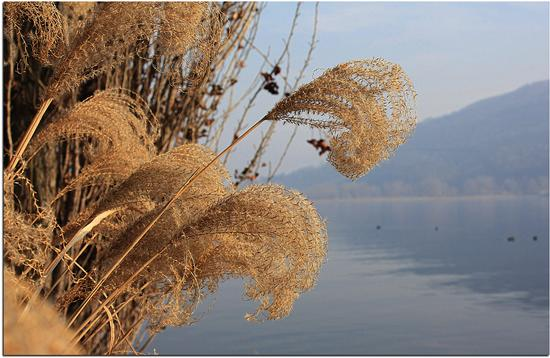 Oro sul Lago - Clusone (1343 clic)