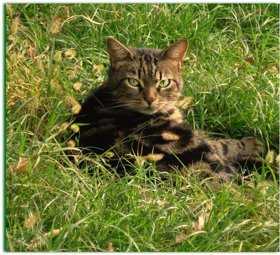 Splendore nell' erba - Melzo (1235 clic)