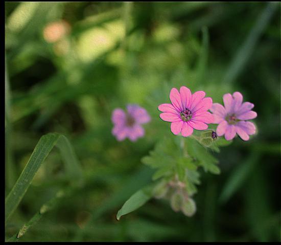 Microflora - Gorgonzola (1080 clic)