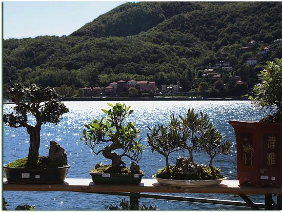 In riva al lago - Lecco (2211 clic)