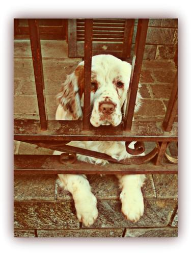 Piccoli cuccioli crescono - Melzo (1299 clic)
