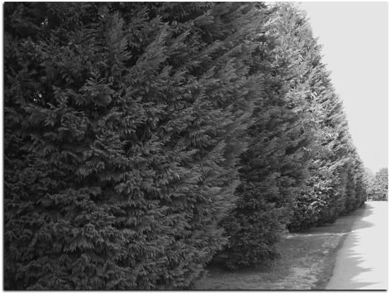 Il Viale che porta al Cimitero - Crespi d'adda (2172 clic)