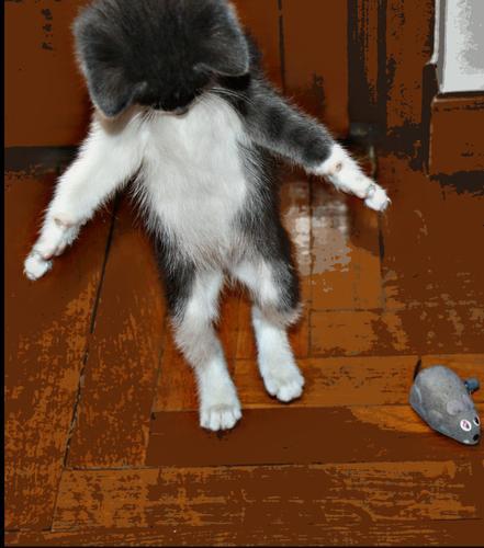 Mi è sembrato di vedere un topo! - Melzo (388 clic)