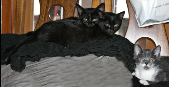 Pepe e le sorelle..... - Melzo (341 clic)