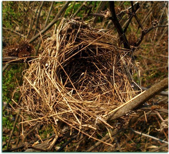 Quando i figli lasciano il nido - Melzo (692 clic)