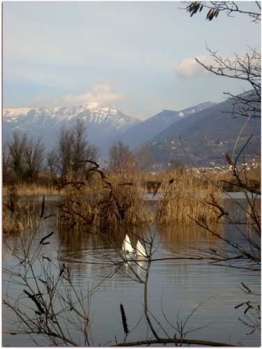 Ops! - Provaglio d'iseo (2541 clic)