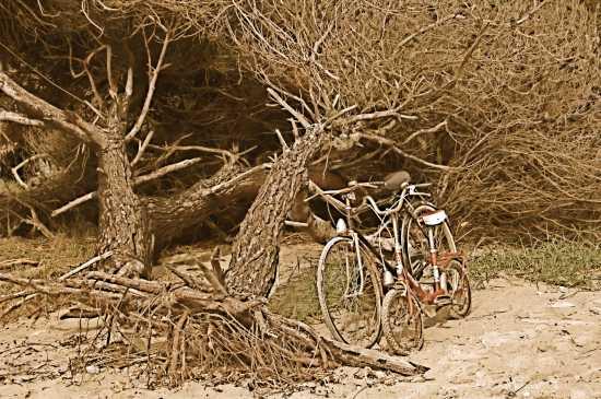 Le biciclette abbandonate... - Vignale riotorto (1899 clic)
