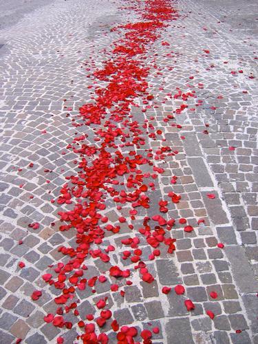 petali di rose al suo passar - Fabriano (1965 clic)