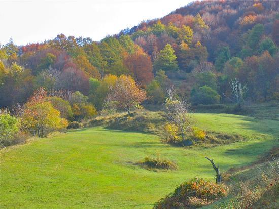 l'autunno e i suoi colori - San benedetto in alpe (1770 clic)
