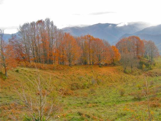 l'autunno e i suoi colori - San benedetto in alpe (1797 clic)