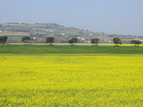 nelle vicinanze di Castrocaro - TERRA DEL SOLE - inserita il 07-Apr-14