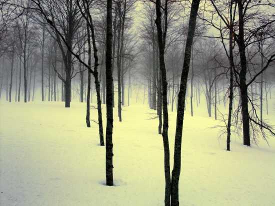 Un corridorio di luce  - Abetone (2155 clic)