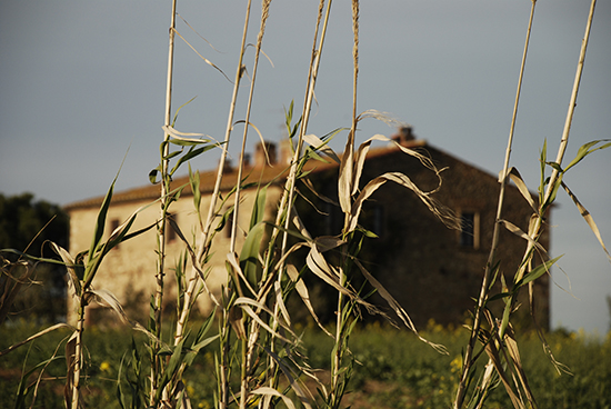 Casa Coloniale - Bibbona (2763 clic)