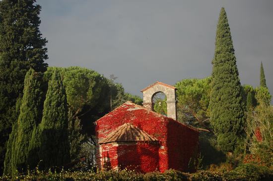 foliage - Vicopisano (2753 clic)