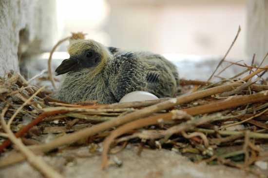 Il piccione  - Messina (3250 clic)