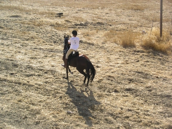 Cavaliere in corsa rionale - Caccamo (3340 clic)